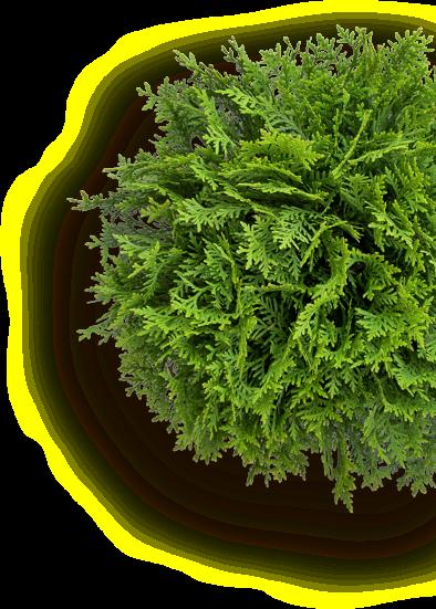 Rastlina obrazok